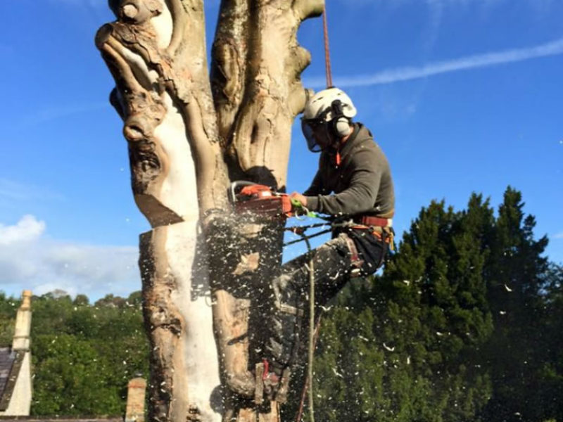 about-jk-tree-services