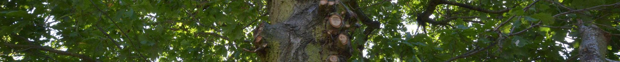 slider-tree-surgery